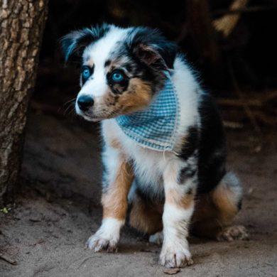 Abogados animalistas para casos de cachorros con parvovirus.
